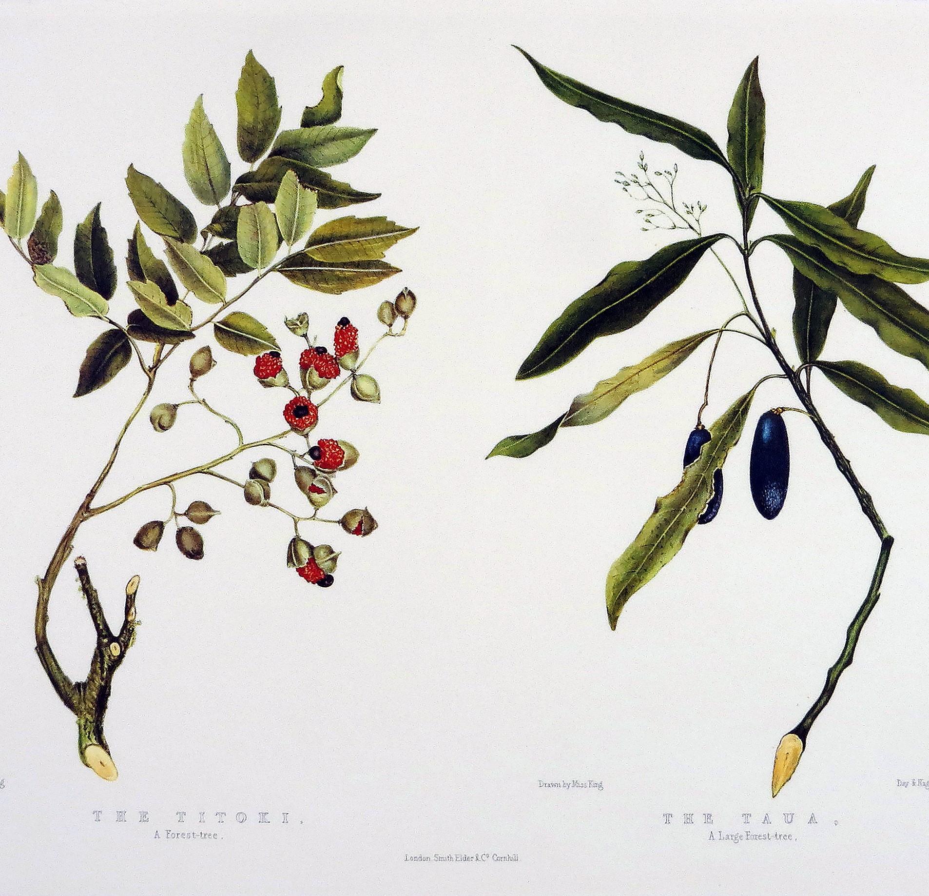 O ludziach i roślinach