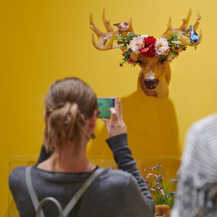 Zdjęcie kolorowe przedstawiające kobietę robiącą telefonem zdjęcie wiszącej na ścianie plastikowej głowie jelenia. Na rogach jelenia umieszczona dekoracja z plastikowych kwiatów oraz figurki kolorowych ptaszków.