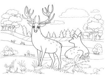 Kolorowanka do druku z jeleniem